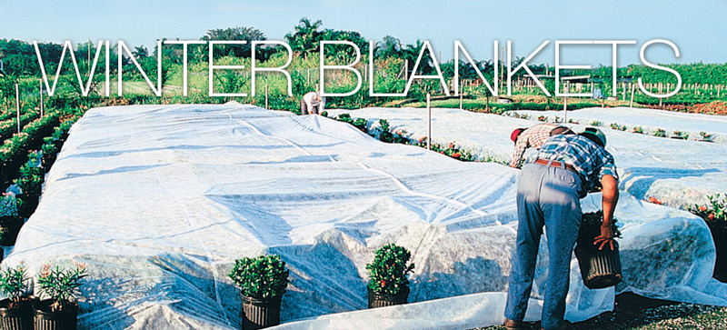 agrofabric-cold-protection-winterblankets